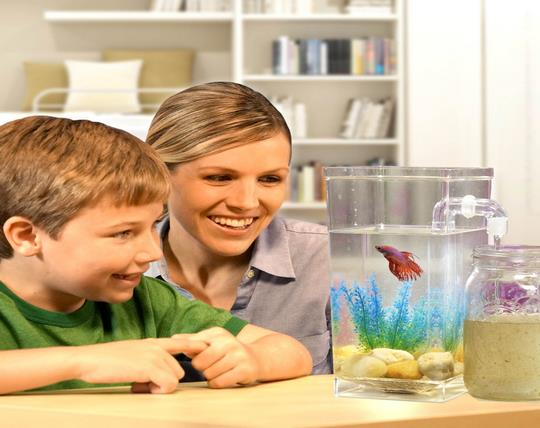magic-aquarium-with-water-cleaning-capability