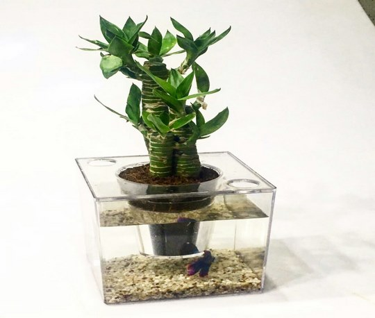 fantasy-aquarium-flower-pot