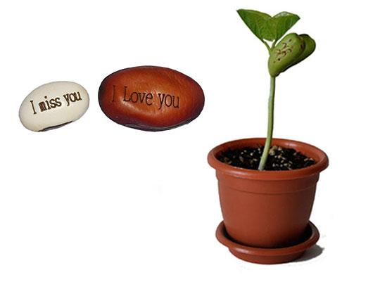 magic-plant
